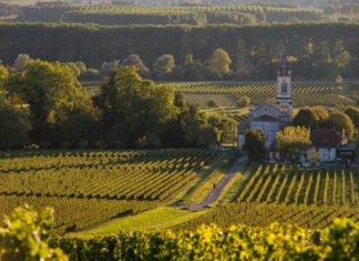 French Vines 1024x682